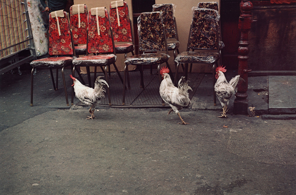 HELEN LEVITT,  Untitled (Three Roosters), New York City , 1971