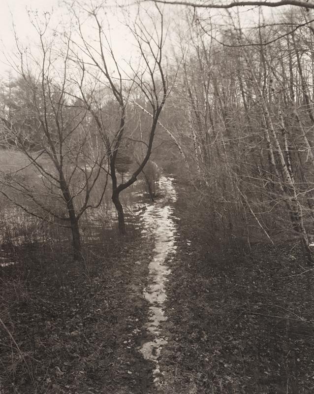 JOHN YANG,  Path Untitled,  1982
