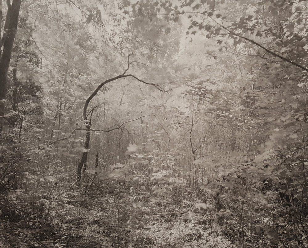 JOHN YANG,  Mianus River Gorge , Bedford, New York Untitled,  1979