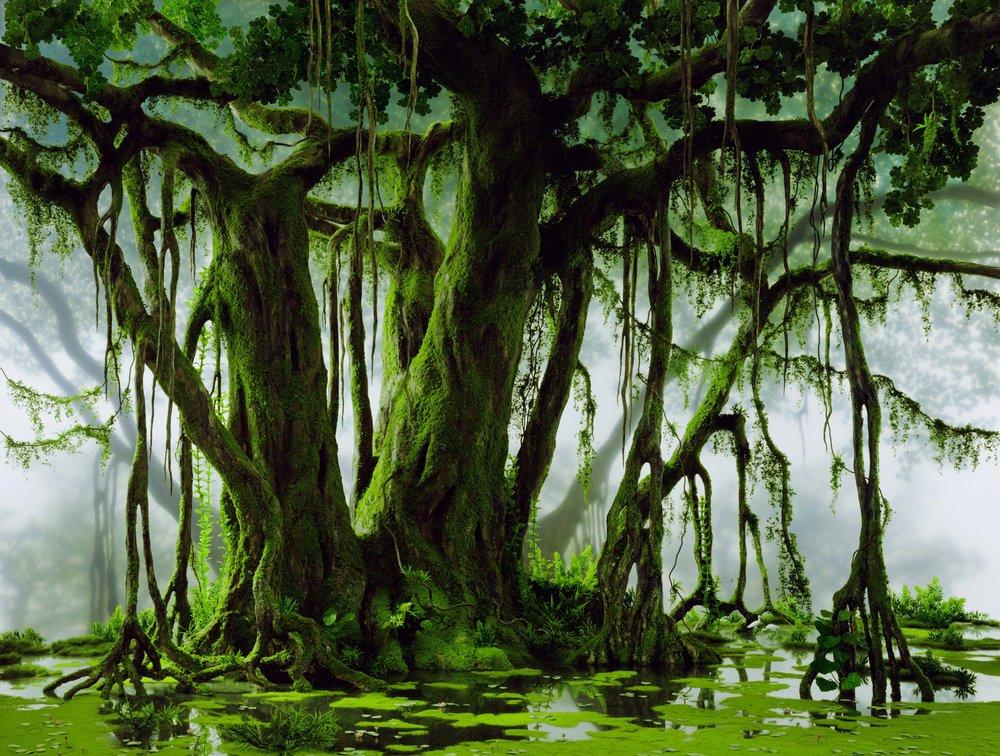 DIDIER MASSARD,  Mangrove , 2003