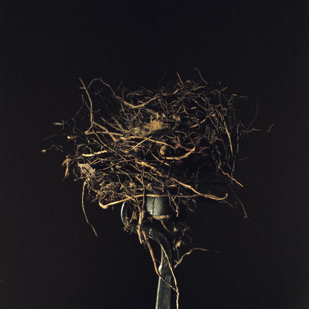 WENDY BURTON,  Candlestick , 2011