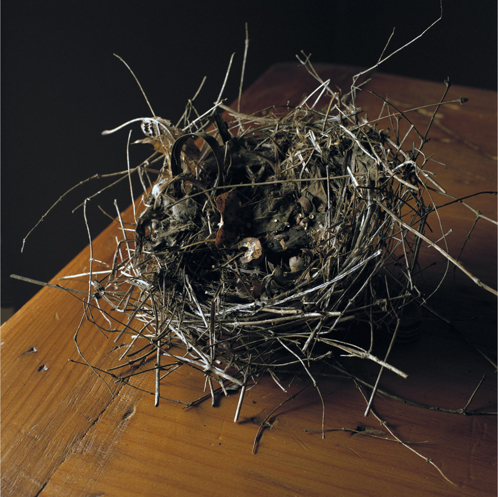 "Skunk's Misery From the series ""Nests"", 2011"
