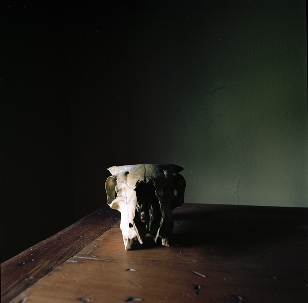 WENDY BURTON,  Ovis aries IV (Connemara Sheep) , 2011