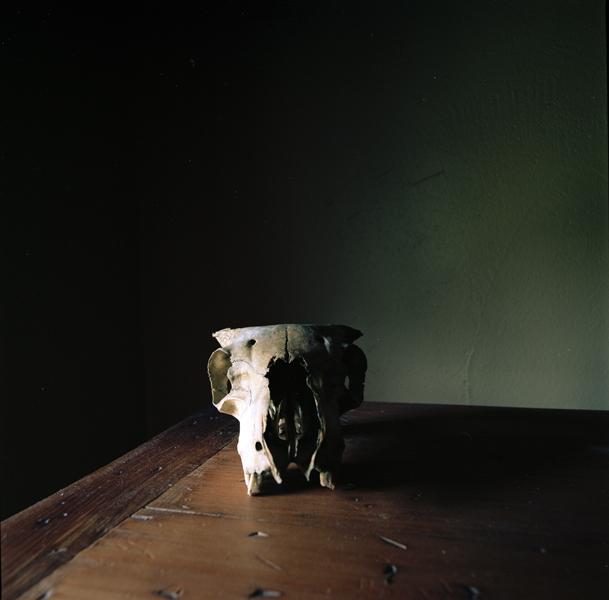 WENDY BURTON,  Ovis aries IV [Connemara Sheep]  (from the series Natural Histories), 2011