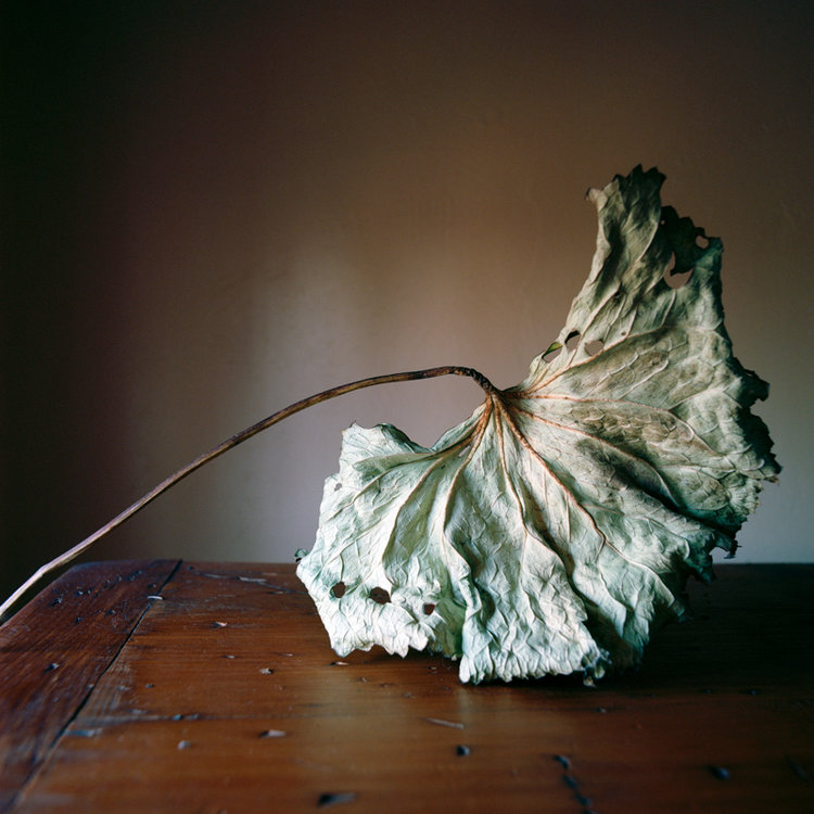 WENDY BURTON,  Botanical No. 23 , 2014