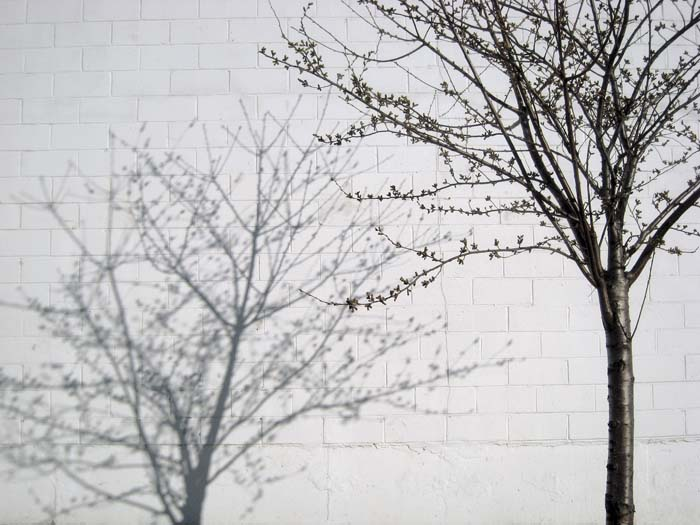 JESSICA BACKHAUS,  Brooklyn   (One Day in November) , 2008