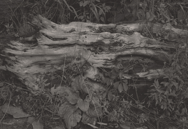 KOICHIRO KURITA,  Deep Forest, Finger Lake, New York,  1994
