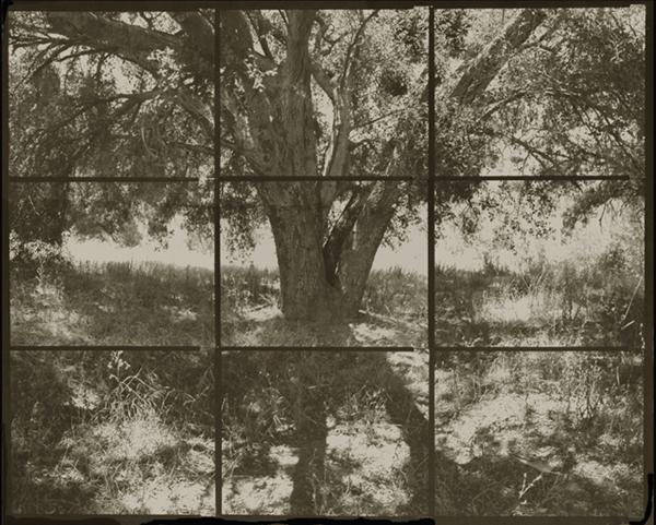 KOICHIRO KURITA,  A Tree at Santa Monica, Santa Monica, California,  2003