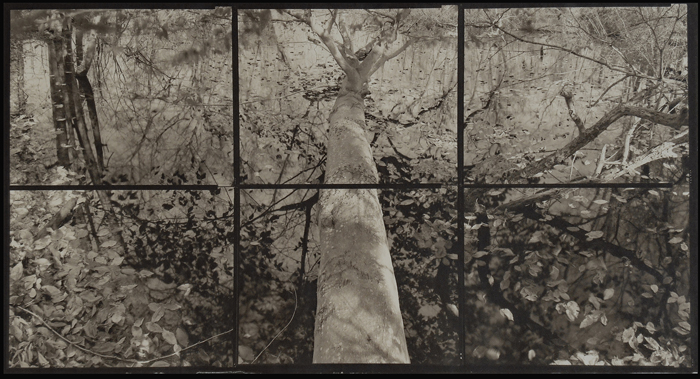 KOICHIRO KURITA,  A Fall in the Art, Southold, New York,  2013