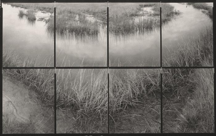 Koichiro Kurita, At the Marsh