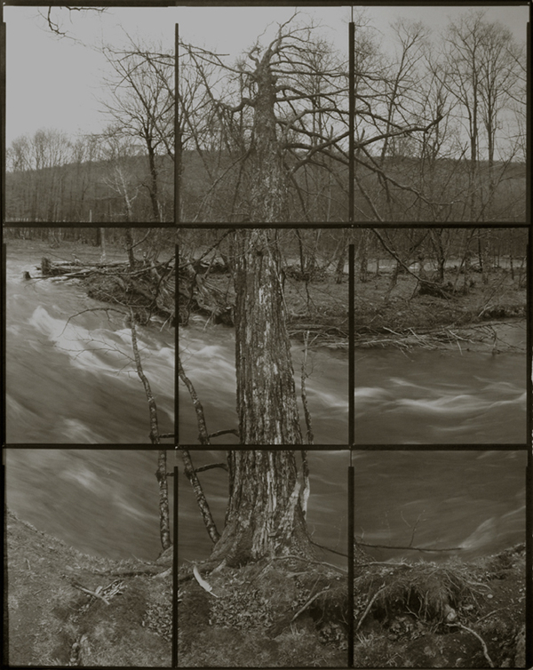 KOICHIRO KURITA,  A Tree at the River, Catskill, New York,  2006