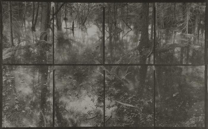 KOICHIRO KURITA,  Flood in Forest, Catskill, New York,  2006