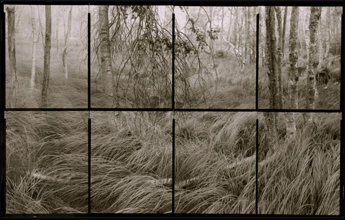 KOICHIRO KURITA,  Glistening Grass, Acadia National Park, Maine,  2010