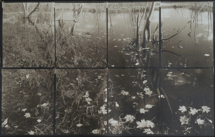 KOICHIRO KURITA,  Leaves in Dark, Ipswich River, Massachusetts,  2015