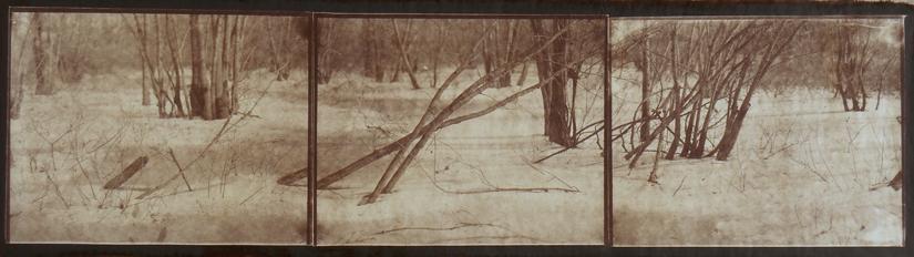 KOICHIRO KURITA,  Winter Concord Woods, Concord, Massachusetts,  2014