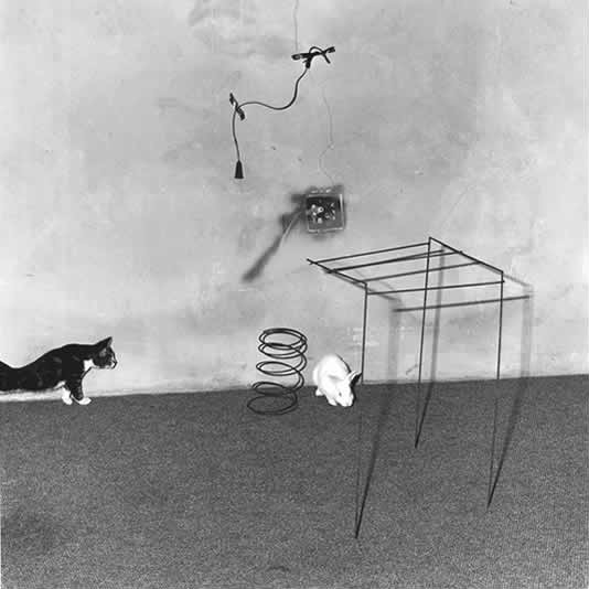 ROGER BALLEN,  Animal Abstraction, 2002