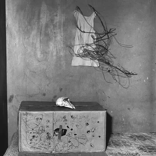 Roger Ballen,  Cat in Box, 2002