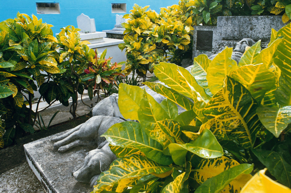 REBECCA NORRIS WEBB,  Havana, Cuba,  2007