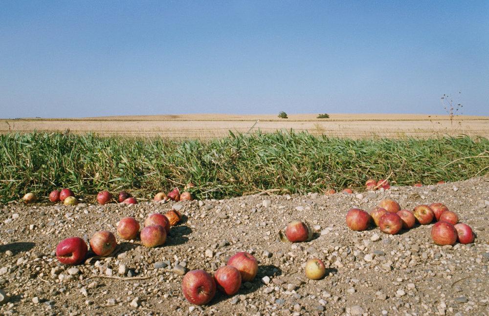 REBECCA NORRIS WEBB,  Fallen Apples,  2005-2011