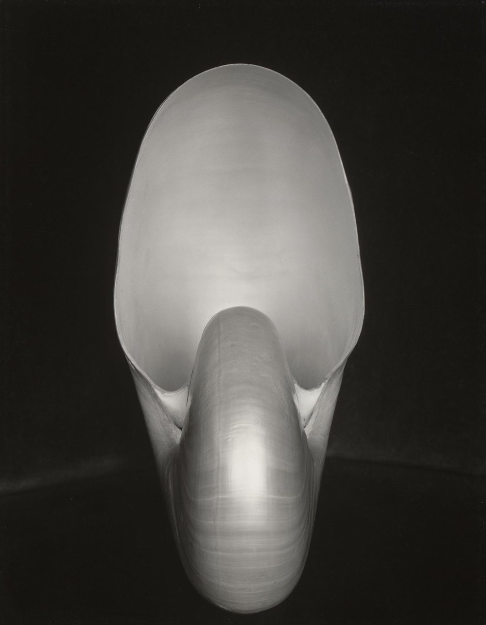 Shell (1S),  1927-printed later by Cole Weston