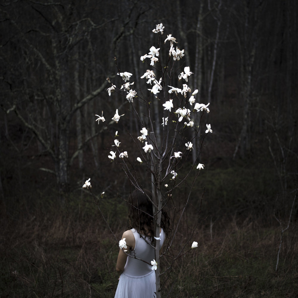 CIG HARVEY,  Magnolia Tree , 2017