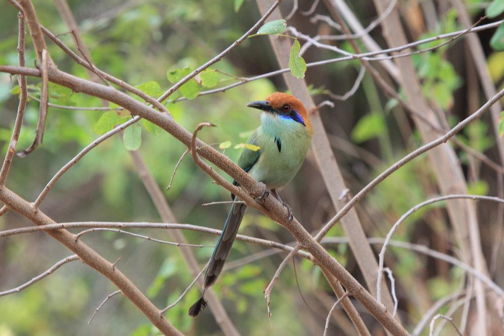 Birdwatching - Bahia de la Luna
