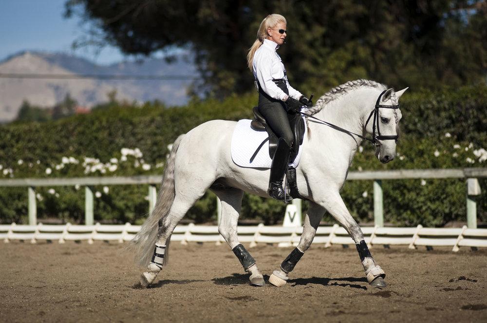 Xadrez Do Ratiro, Lusitano Stallion, imported from Brazil.