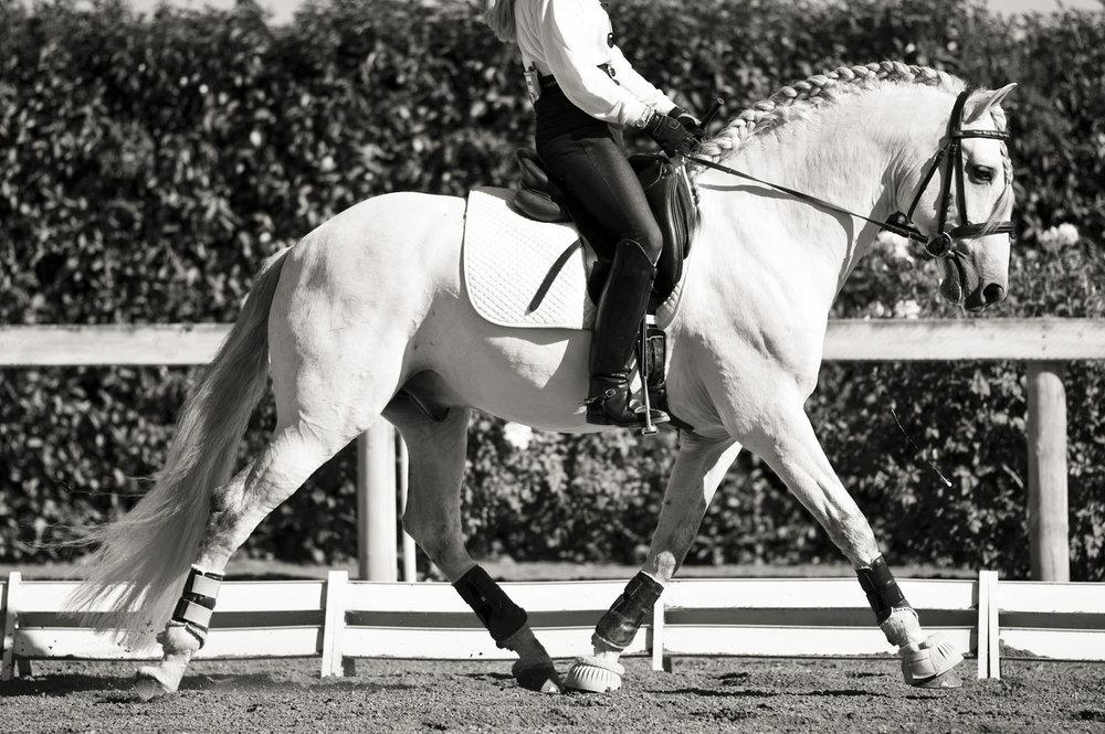 The_White_Horse.jpg