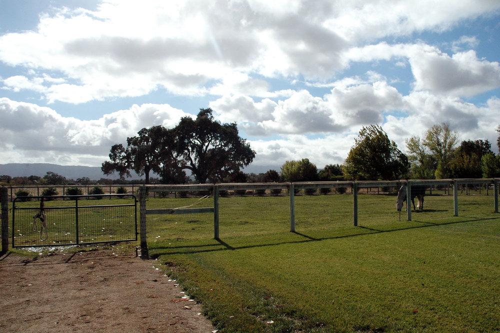 2008-pastures.jpg