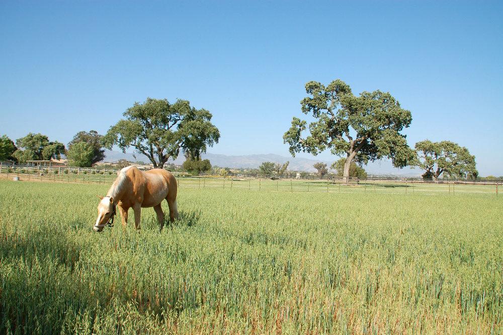 pretty-horse_0922.jpg