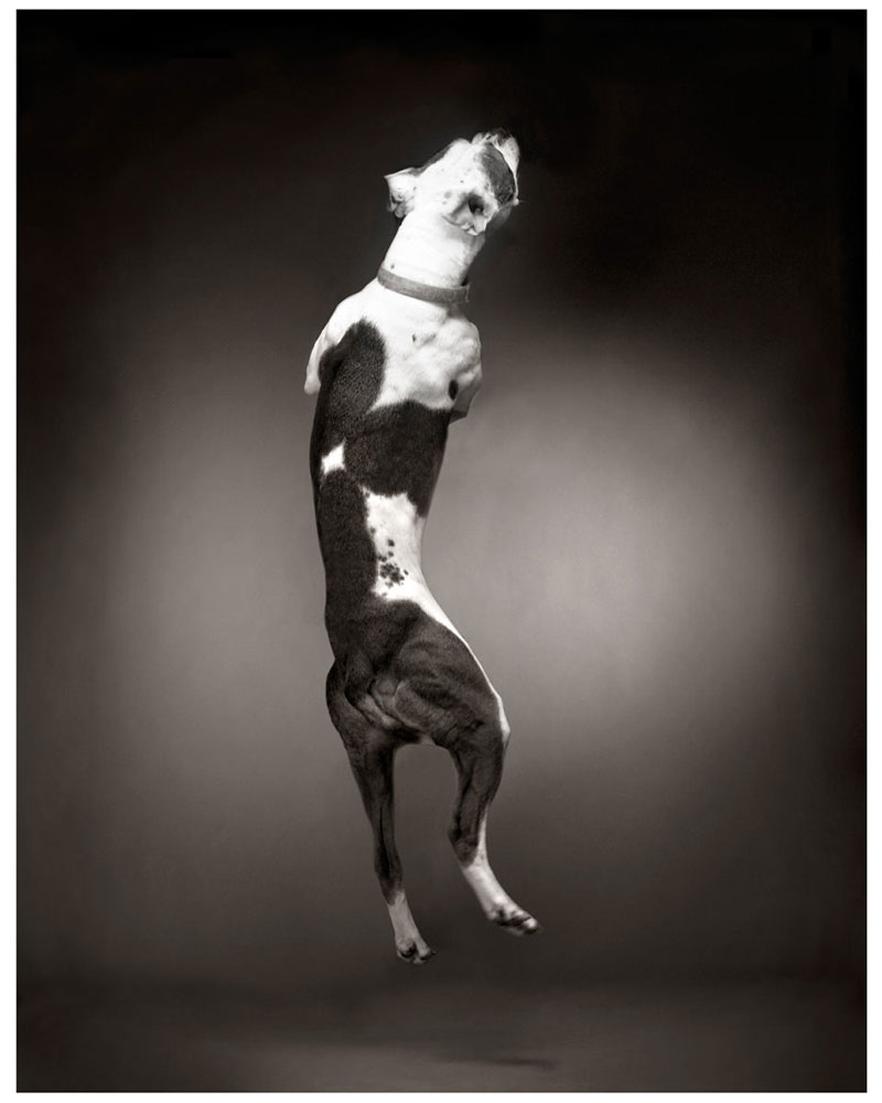 jumpingdog1.jpg