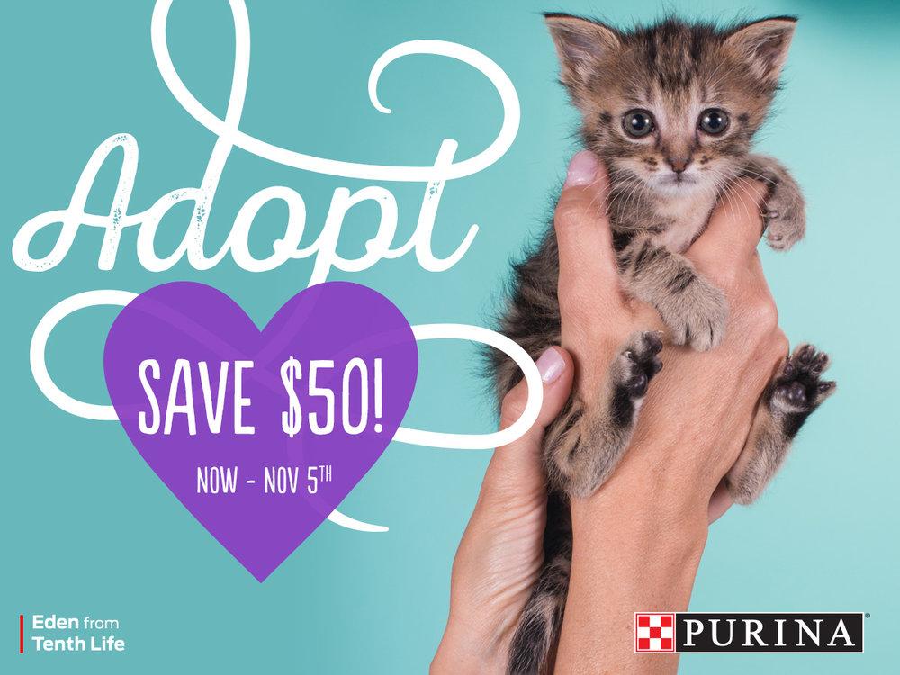 npcc2931-campaign2017-social-50-cat-a-fnl.jpg