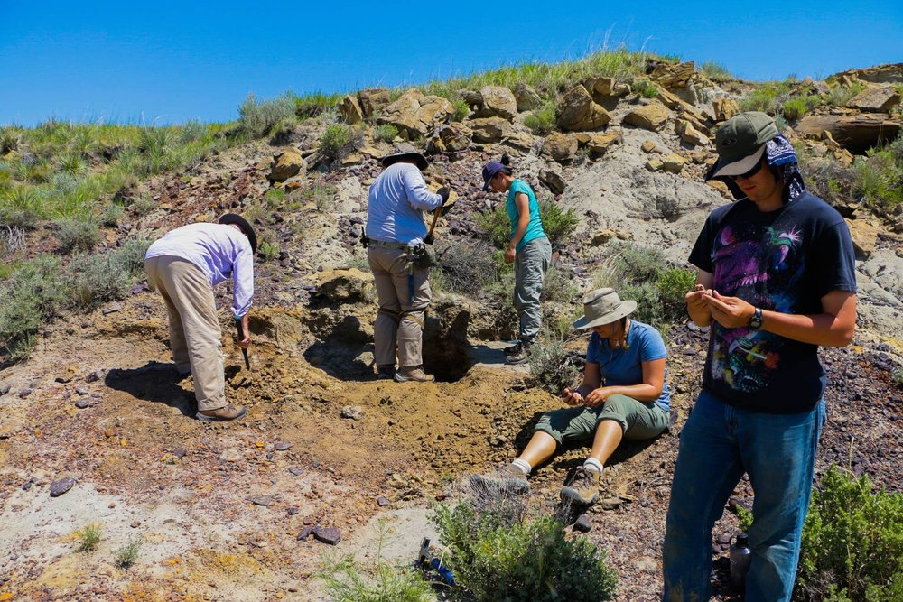 2016 Students digging out the productive horizon at a vertebrate microfossil locality