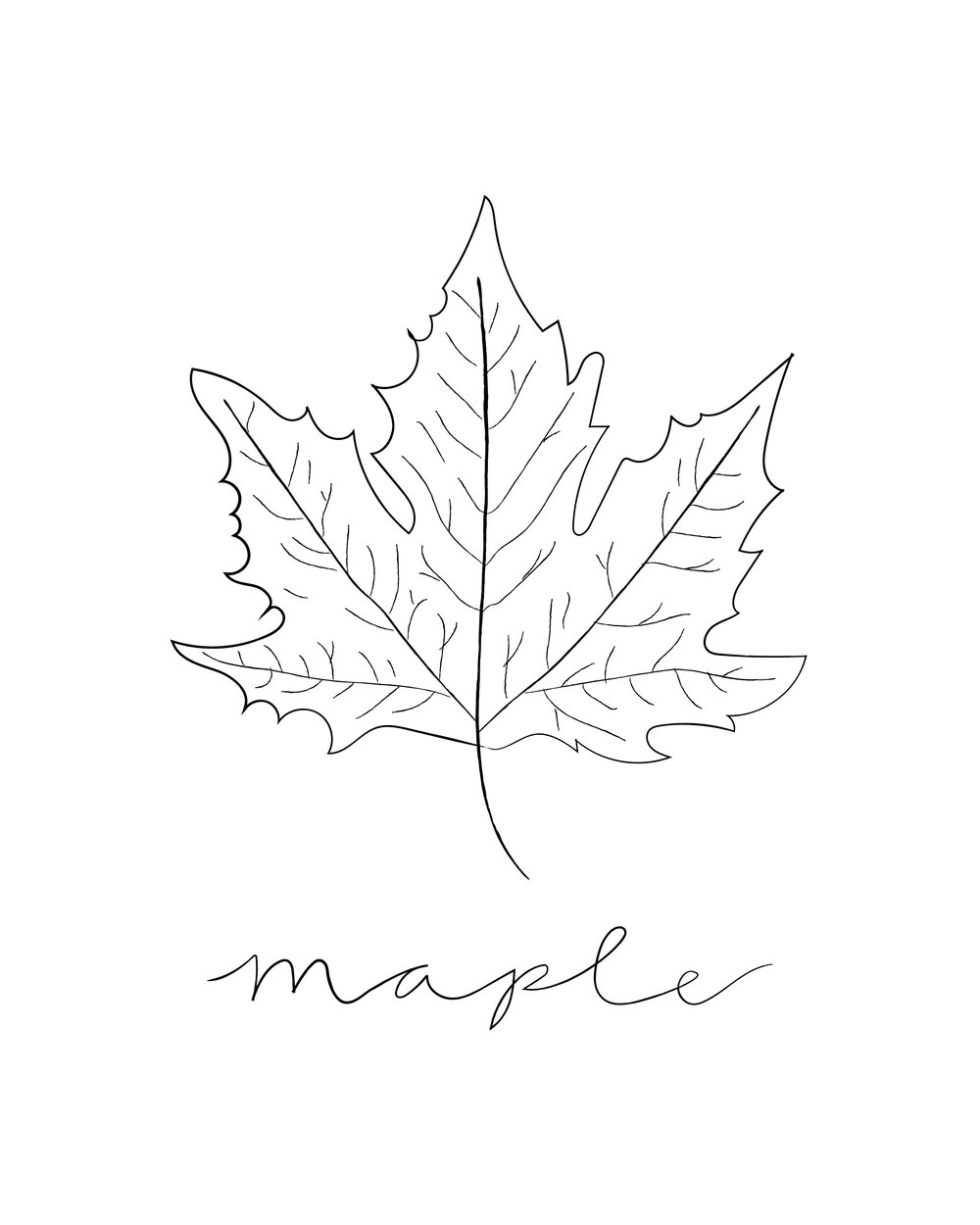maple watercolor illustration.jpg