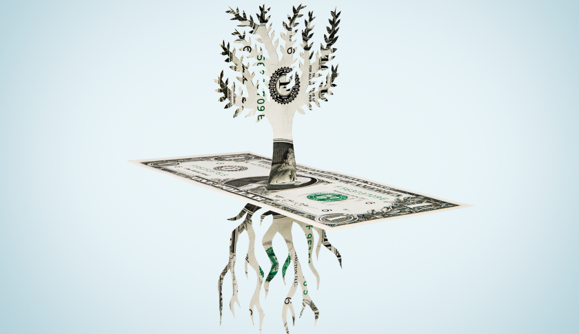 money-dollar-bill-tree-gettyimages-652146149.jpg