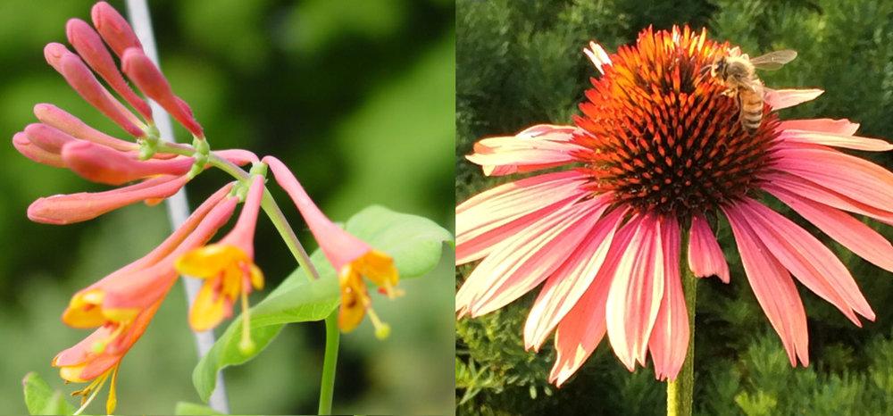2 flowers.jpg