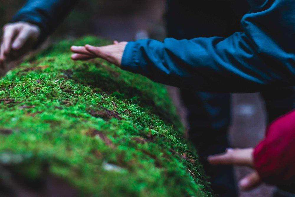 moss touch.jpg