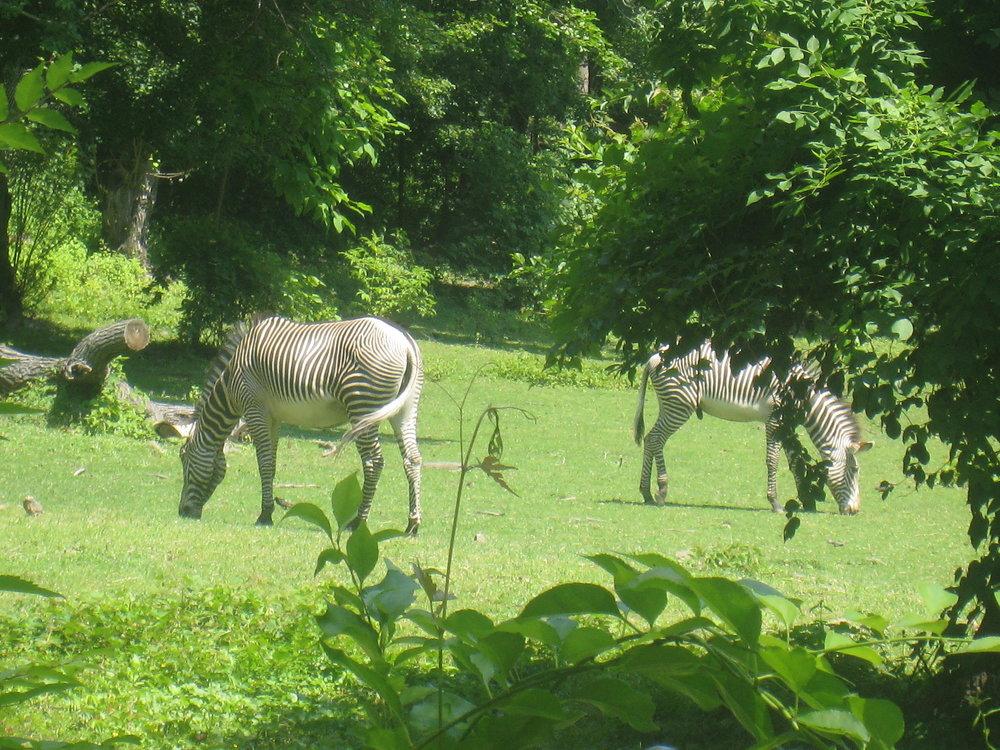 Zoos Talia S Bucket List
