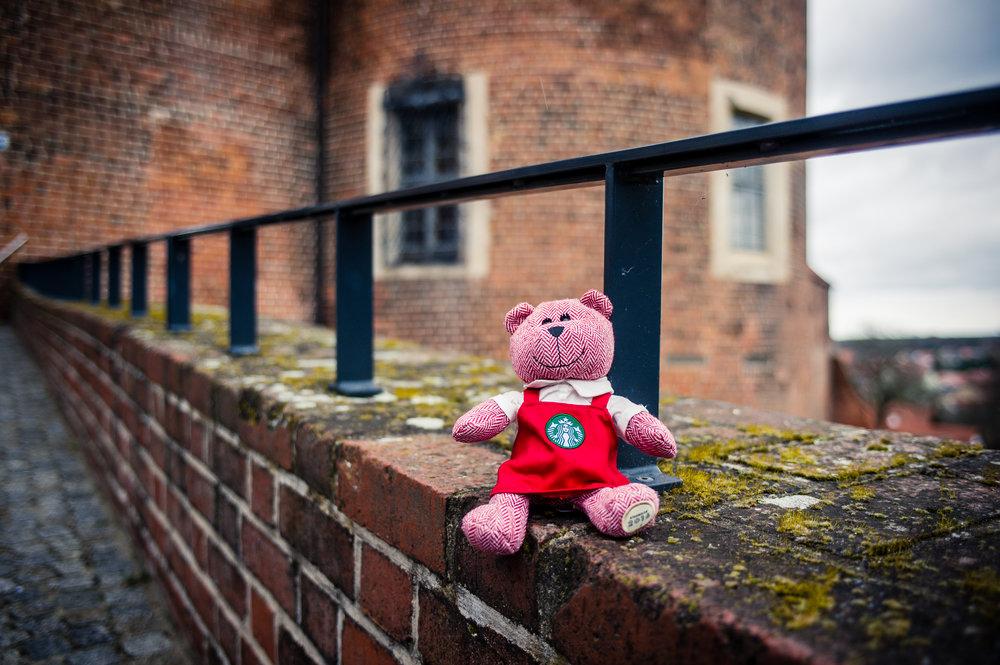 traveling barista bear bad belzig.jpg