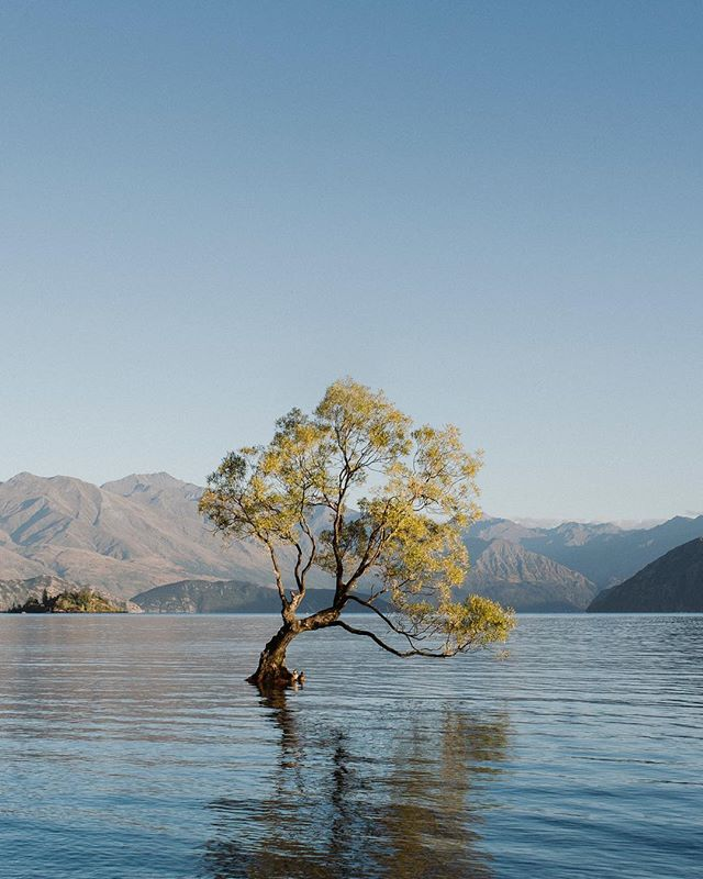 The first time we visited this tree 4 years ago, it would only have been a dream to shoot a wedding here in Wanaka. And yet the day came and it was incredible. Thank you Emma & Chris for bringing us here, and also Kate T., our past bride, for giving Emma a word about us, it's a very special thing for us 🖤