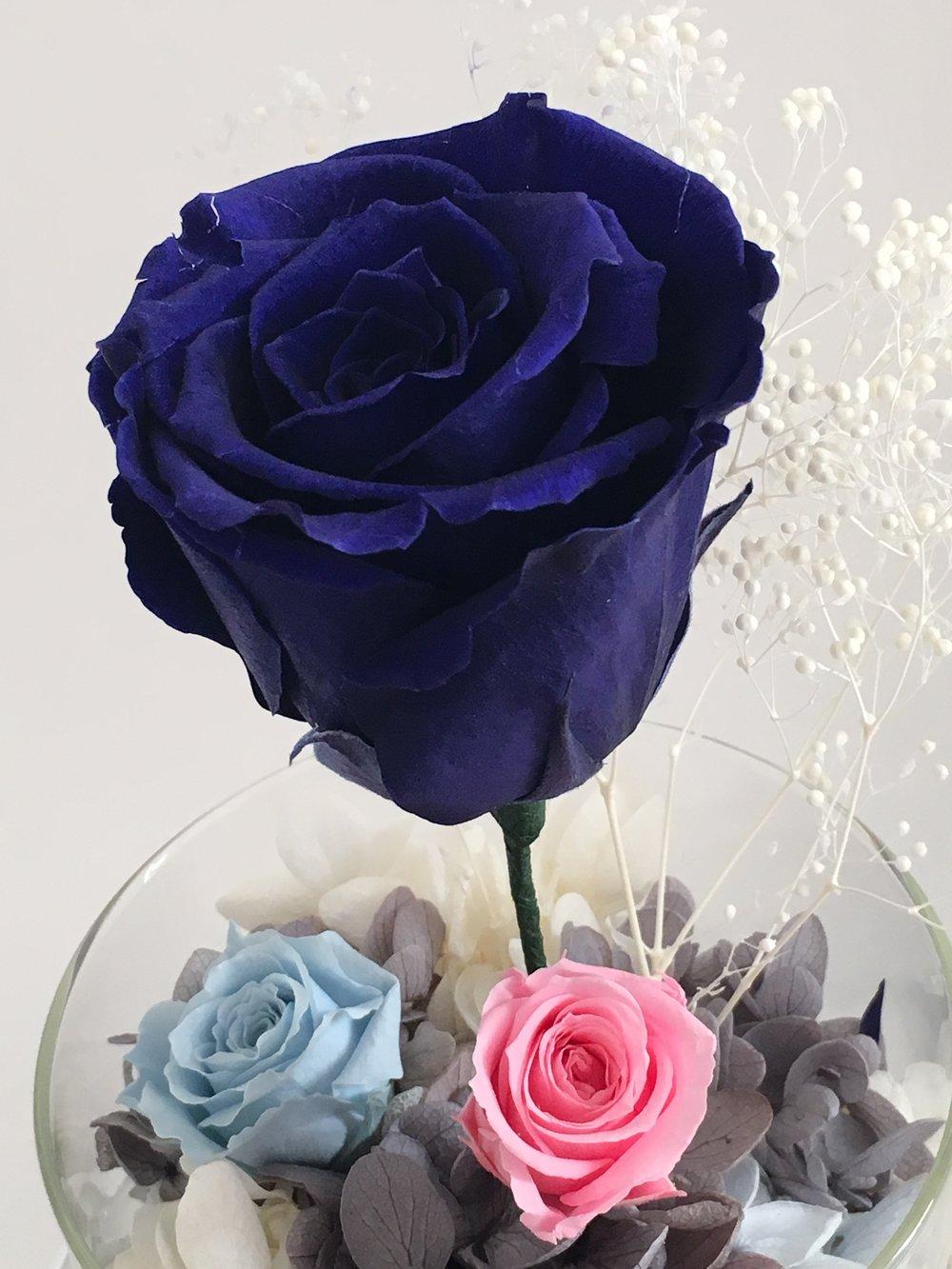 Eternal rose midnight blue sweet life living izmirmasajfo