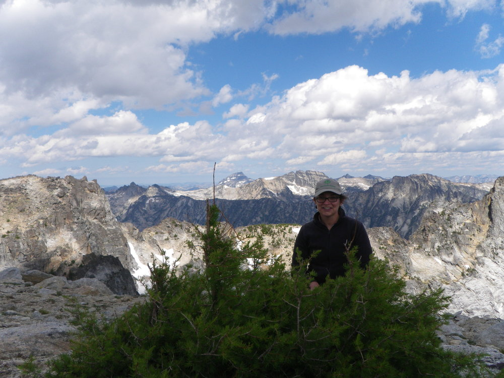 Marie with a krummholz subalpine larch at 3,000 m on Trapper Peak, Montana.