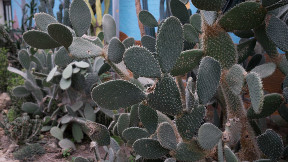 Camel & Cactus-21.jpg