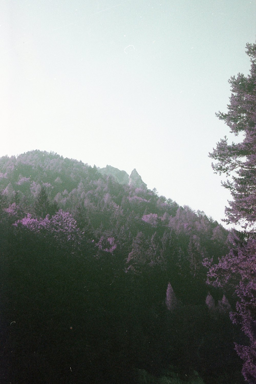 Slovenia094.jpg