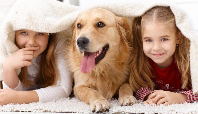 Pet Care in The Woodlands - Blog