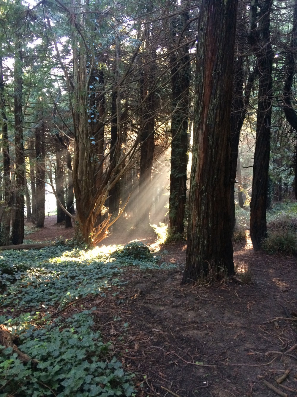 """Breakthrough"" John McLaren Park, San Francisco, California Taken by my daughter on January 14, 2017 at 8:30am Thank you, Alicia, for sharing this beautiful photo from your walk this morning  in this magical place. It is the perfect analogy for the awareness insights that so inspire me with my amazing clients."