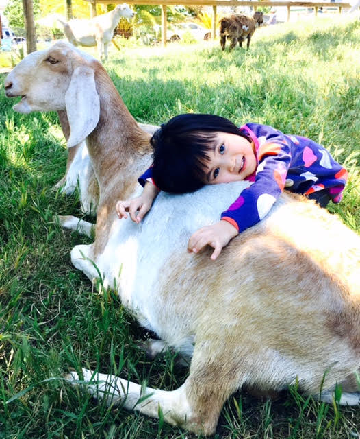 A small kid hugging a goat