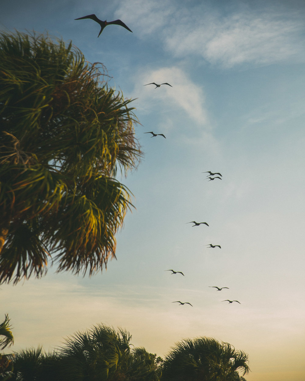Frigate-birds flying overhead as we prepare for the long day ahead of us.