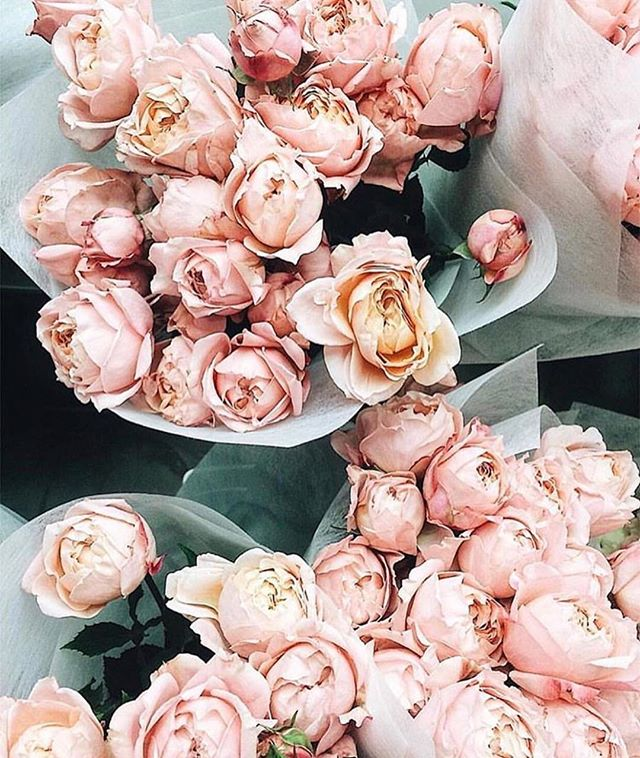 Today, let's appreciate the beauty that surrounds us ✨ . . . . . . #FaceLove #SeeingBeauty #Nature #Love #Peonies #PrettyinPink #Blush