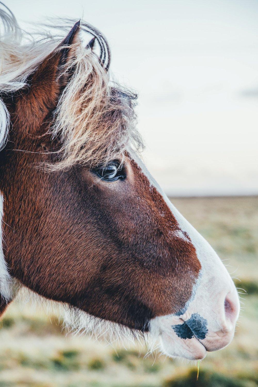 horse geek